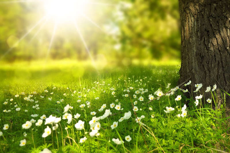 Image bien etre nature