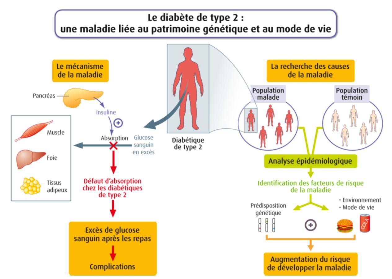Comment perdre du poids diabète type 1