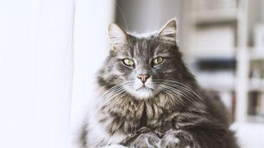 Faire perdre du poids chat