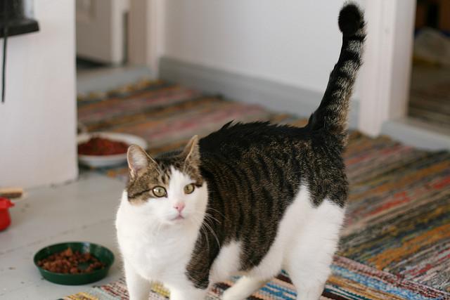 Plus perdre du poids de chat