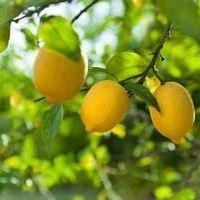 Perdre du poids sans regime citron